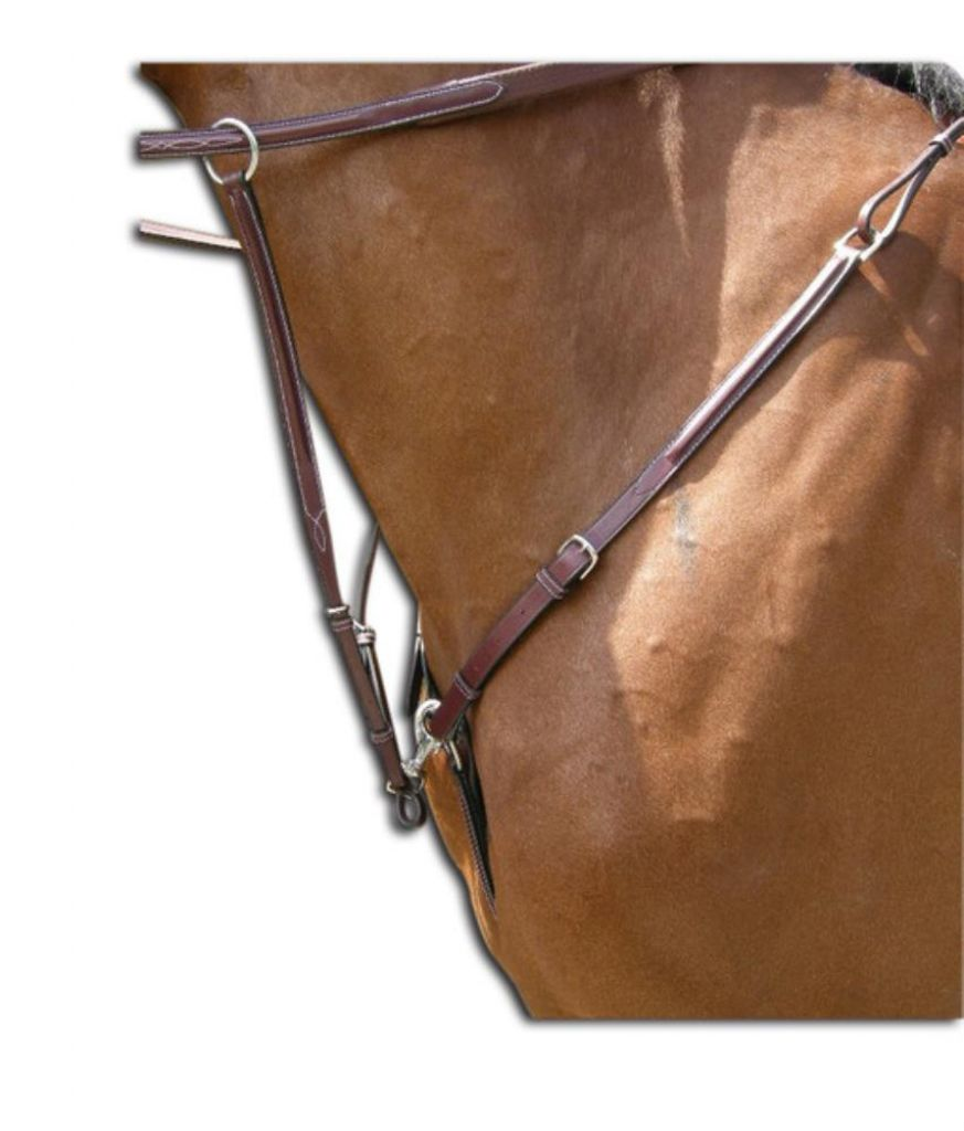 COLLIER DE CHASSE US TUESDAY JUMP IN