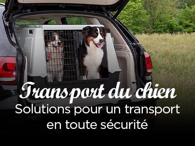 Caisses de transport pour chiens !