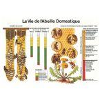 TABLEAU VIE DE L'ABEILLE