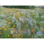 MELANGE PLANTES UTILES BIODIVERSITE