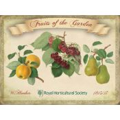 PLAQUE FRUITS GARDEN (H)